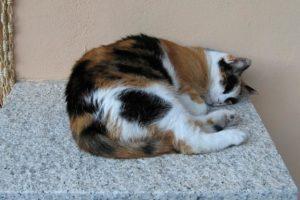 переживание горя - усыпили кошку